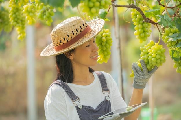 Gospodarstwo zielone winogron. kobieta ubrana w kombinezon i słomkowy kapelusz sukienka gospodarstwa
