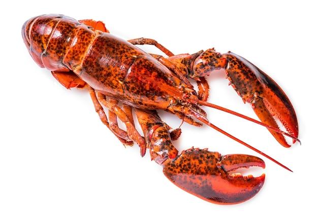 Gotowane homara na białym, steam lobster na białym tle.