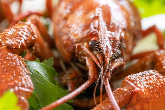 Gotowane raki z bliska i natka pietruszki białko przystawki