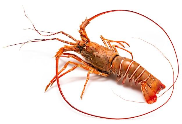 Gotowane spiny lobsters asia seafood na białym tle