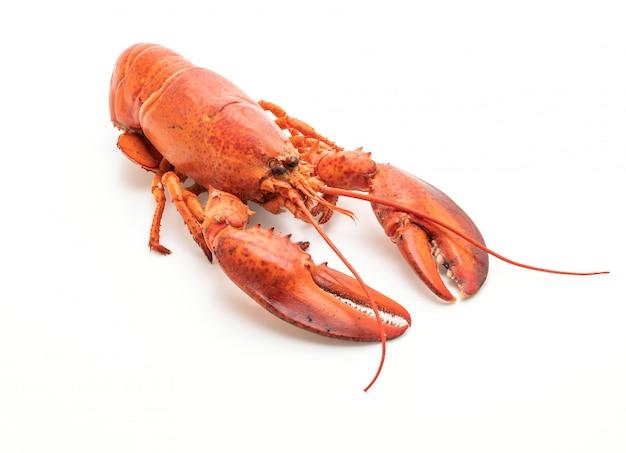 Gotowany homar na białym tle
