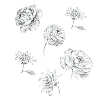 Graficzne ręcznie malowane kwiaty boho na białym tle. projekt vintage rustykalne kwiaty.
