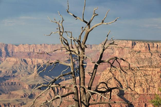 Grand canyon w arizonie, stany zjednoczone