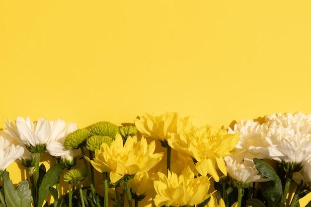 Granica żółte i białe chryzantemy na żółtym tle