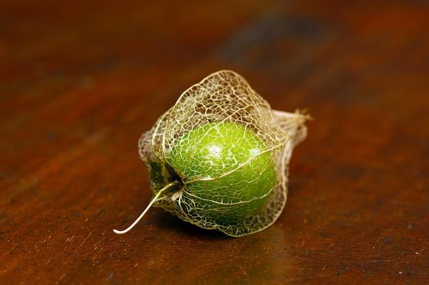 Groundcherry (physalis alkekengi), po indonezyjsku znany jako ciplukan, jest bogaty w witaminy i jest dobry dla zdrowia. nazwa zwyczajowa jako chińska latarnia i japońska latarnia, z suchą korą, w płytkiej ostrości.