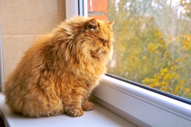 Gruby kot siedzi na parapecie i patrząc na jesień