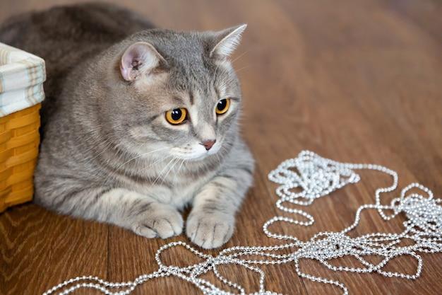Gruby pręgowany kot brytyjski leży na podłodze, bawi się błyszczącymi koralikami lub girlandą.
