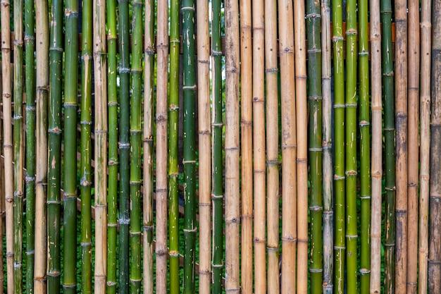 Grunge zielony bambus ogrodzenia, tekstura tło .. \ t