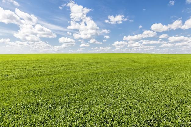 Grunty rolne pod względem produktów zbożowych do produkcji zbóż i żywności