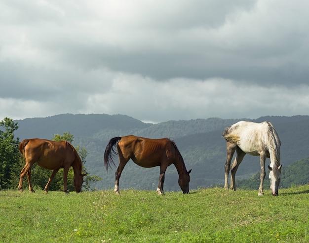 Grupa brązowych i białych koni pasących się na łące z zieloną trawą