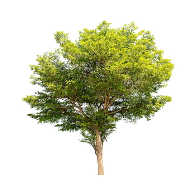 Grupa drzew na białym tle dla materiałów projektowych