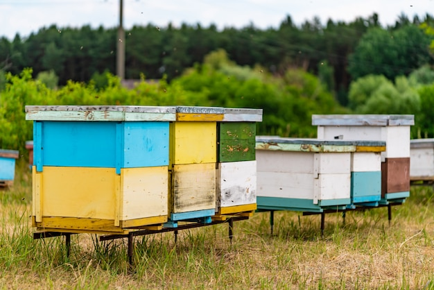 Grupa dużych i małych kolorowych uli dla pszczół w lesie