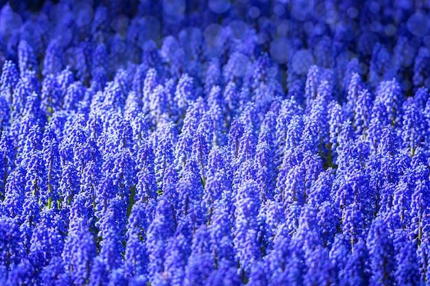 Grupa dzikich kwiatów łubinu w wieczornym świetle.