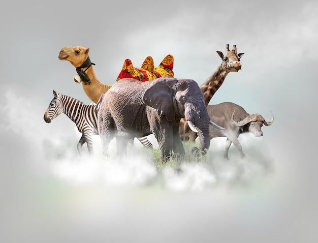 Grupa dzikich zwierząt - żyrafa, słoń, zebra, wielbłąd, bawół nad białymi chmurami na szarym niebie