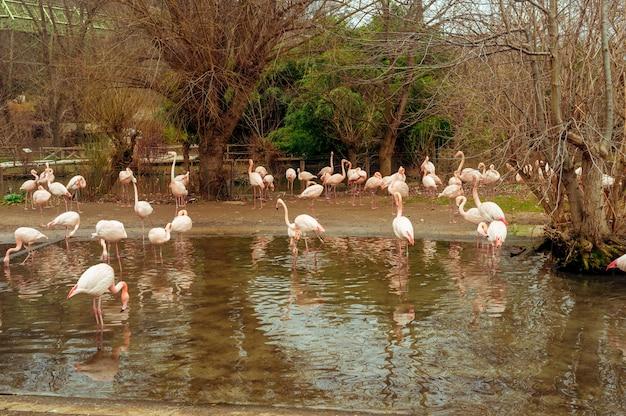 Grupa flamingów brodzących w stawie w jasny słoneczny dzień