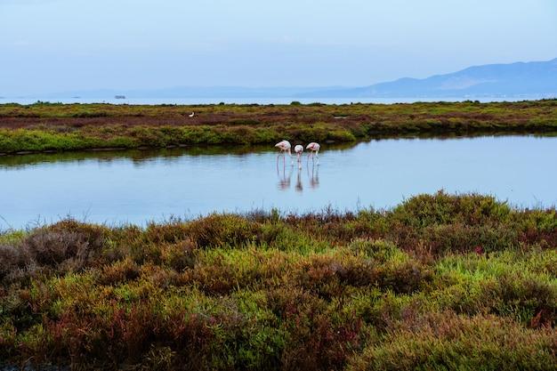 Grupa flamingów spaceruje po wodzie morskiej między formacjami skalnymi, które wychodzą z wody w delcie rzeki. ebro delta