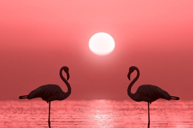 Grupa flamingów stoi w lagunie na tle złotego zachodu słońca i jasnego, dużego słońca