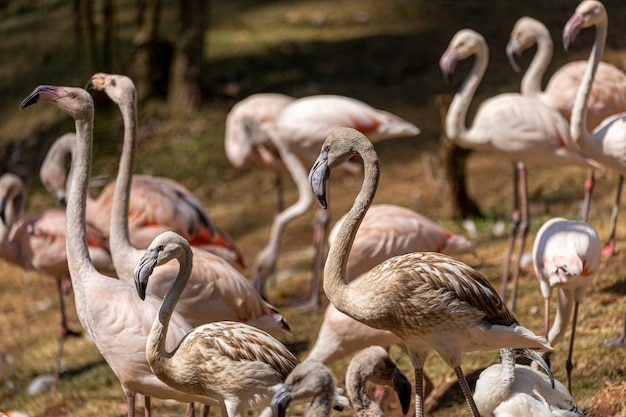Grupa flamingów stojących w trawie.