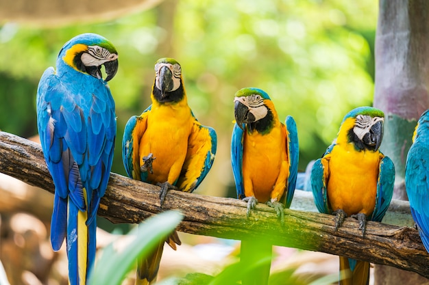Grupa kolorowa ara na gałąź