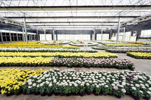 Grupa kolorowych kwiatów w szklanym domu