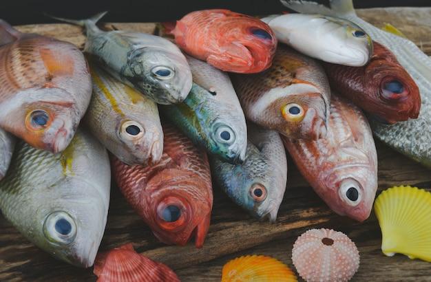Grupa kolorowych ryb morskich w szarym odcieniu.