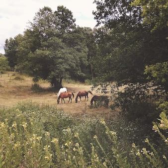 Grupa koni wypasanych na letniej łące