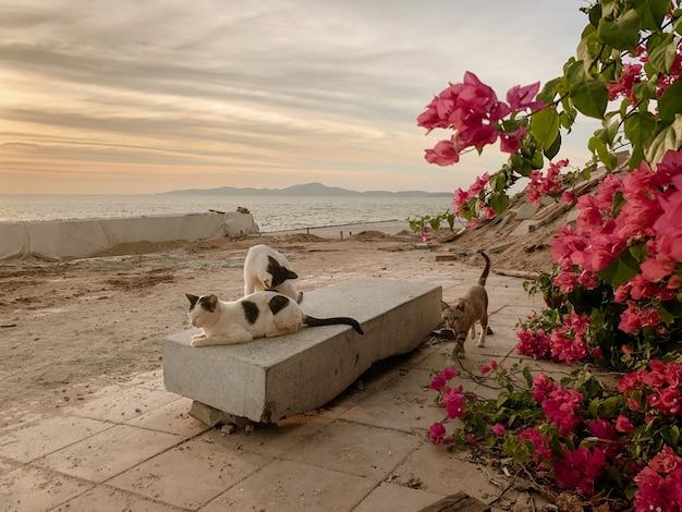 Grupa kotów na ławce nad morzem podczas zachodu słońca