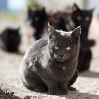 Grupa kotów siedzi i patrząc na kamery
