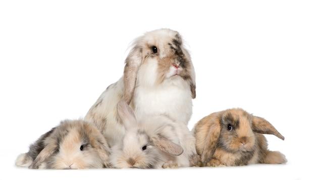 Grupa króliczki na białym tle