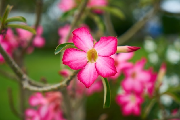 Grupa kwiat kwiat roślin charakter obiektów