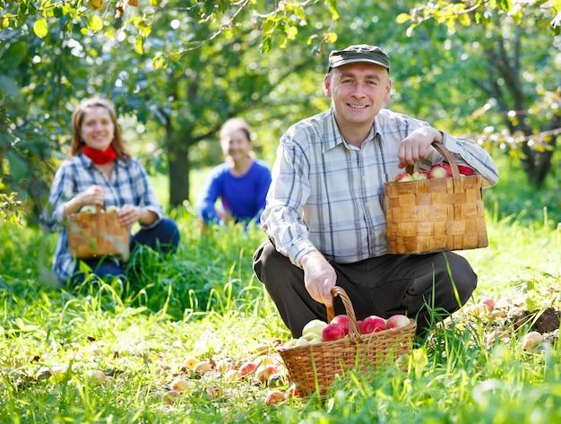 Grupa ludzi zbiera zbiory jabłek w ogrodzie