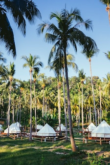 Grupa luksusowych namiotów pośrodku dżungli. egzotyczna plaża w tajlandii ukryte wyspy