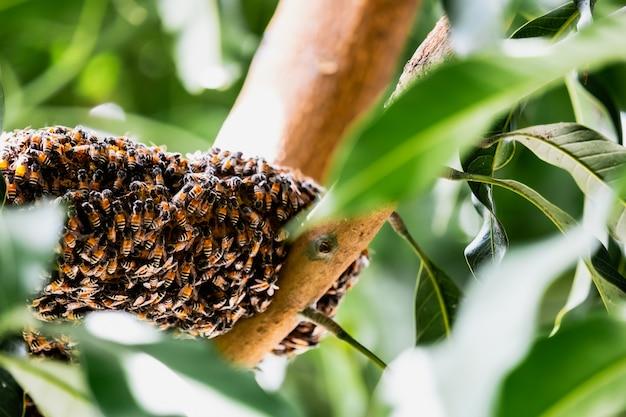 Grupa małe pszczoły pracuje przy honeycomb na drzewie