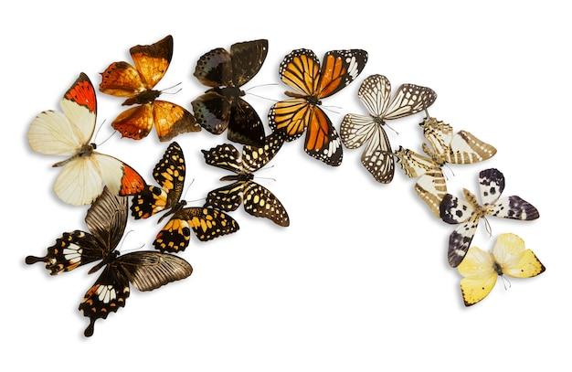 Grupa motyl na białym tle