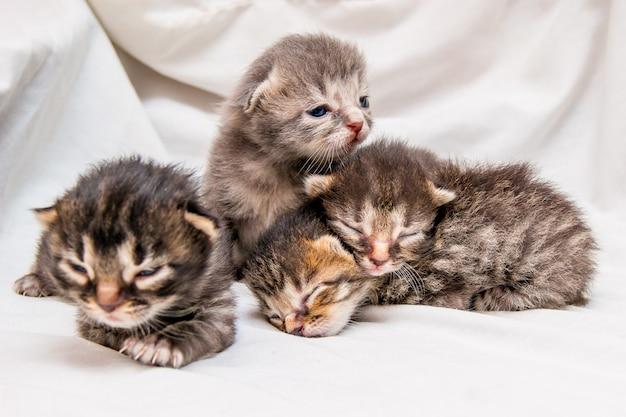 Grupa nowonarodzonych kociąt. niewidome małe słodkie kocięta czekają na mamę