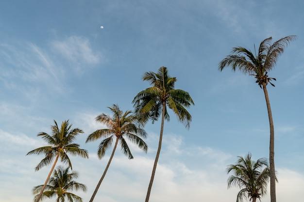 Grupa palm kokosowych i błękitne niebo.
