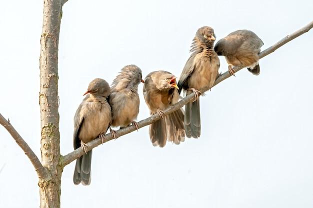Grupa papla w dżungli siedząca na drzewie robi preen
