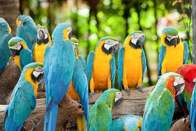 Grupa papuga ara na drzewie.