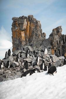 Grupa pingwinów spacerująca po zamarzniętej plaży