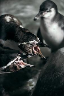 Grupa pingwiny w zoo pozuje