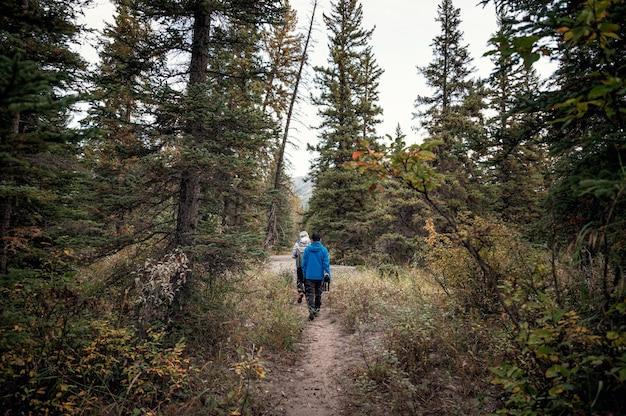 Grupa podróżnika idącego w głębokim lesie sosnowym jesienią w parku narodowym banff
