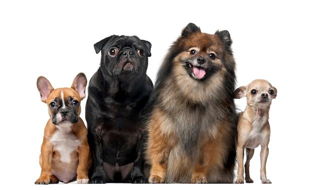 Grupa psów przed białą ścianą