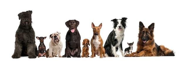 Grupa psów stojących przed kamerą, na białym tle