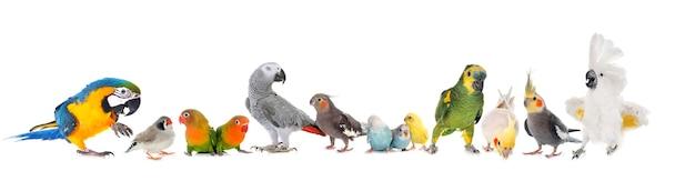 Grupa ptaków pf na białym tle