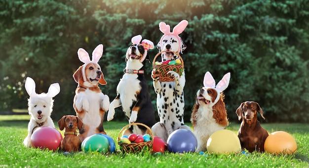 Grupa różnych psów z wielkanocnymi kolorowymi jajkami na trawniku