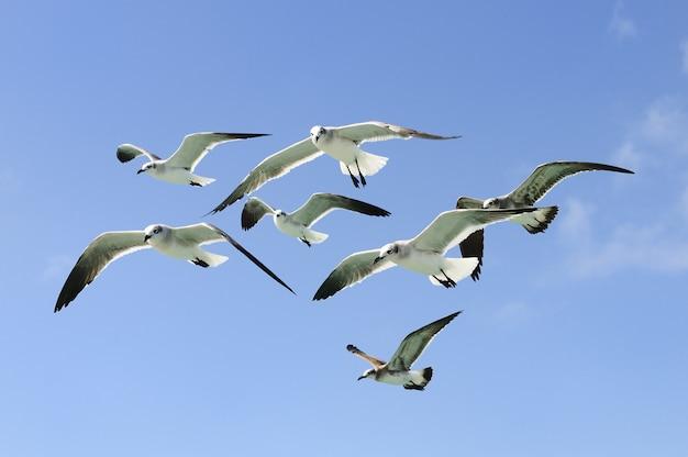Grupa seagulls lata w niebie