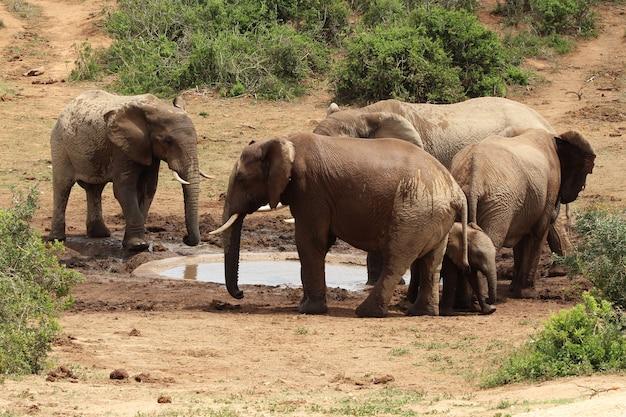 Grupa słoni bawiąca się wokół małego jeziora pośrodku dżungli
