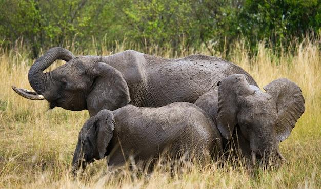 Grupa słoni na sawannie.