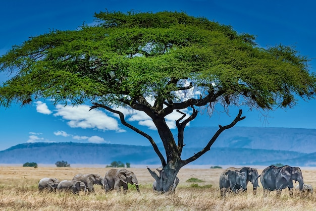 Grupa słoni pod wielkim zielonym drzewem na pustyni