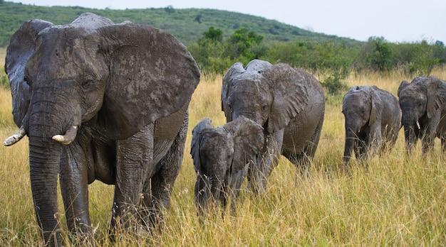 Grupa słoni spaceruje po sawannie.